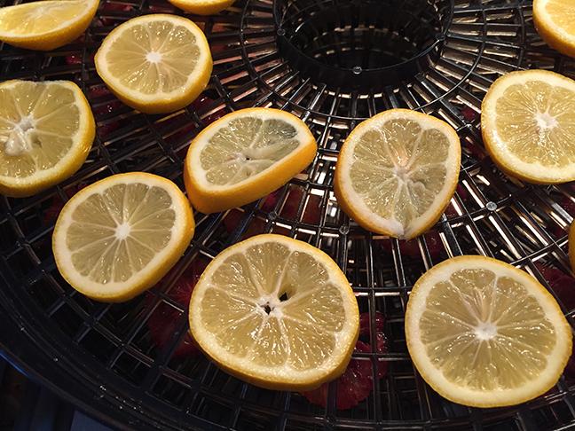 Meyer lemons in the dehydrator